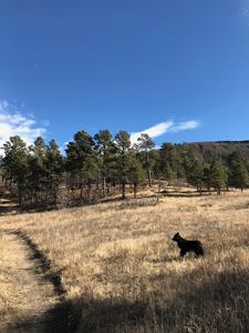 Hiking with Dogs - Border Collie in Sugarite Canyon State Park, Lake to Lake Trail