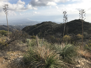 Hiking Temescal Ridge above Pacific Palisades CA