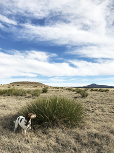 Jett, Jack Russell Terrier hiking in New Mexico