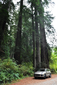 Porsche Cayenne S in California Redwoods