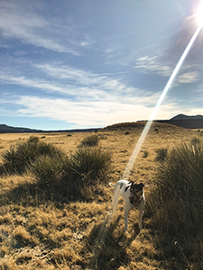 Sunbeams hits Raton ranch