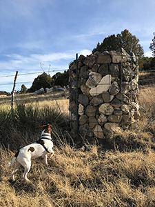 Jack Russell Terrier mix hiking at Eagle Tail Mesa, Raton NM